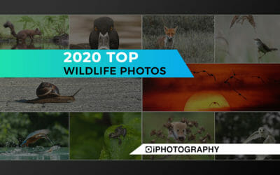 Wildlife Photographs: My Favourite Shots of 2020 by Rachel Sinclair