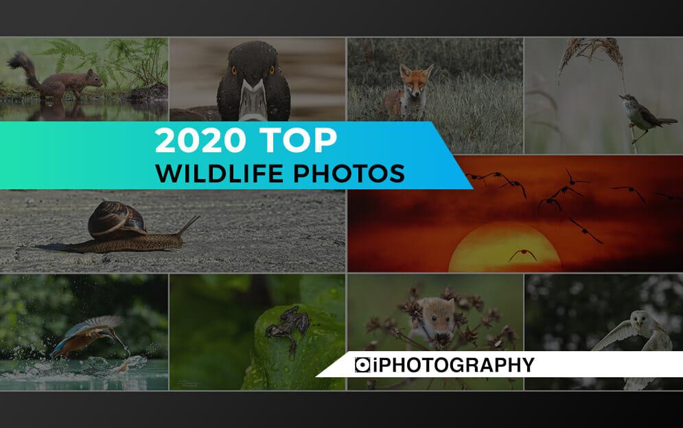 wildlife photographs rachel sinclair Blog