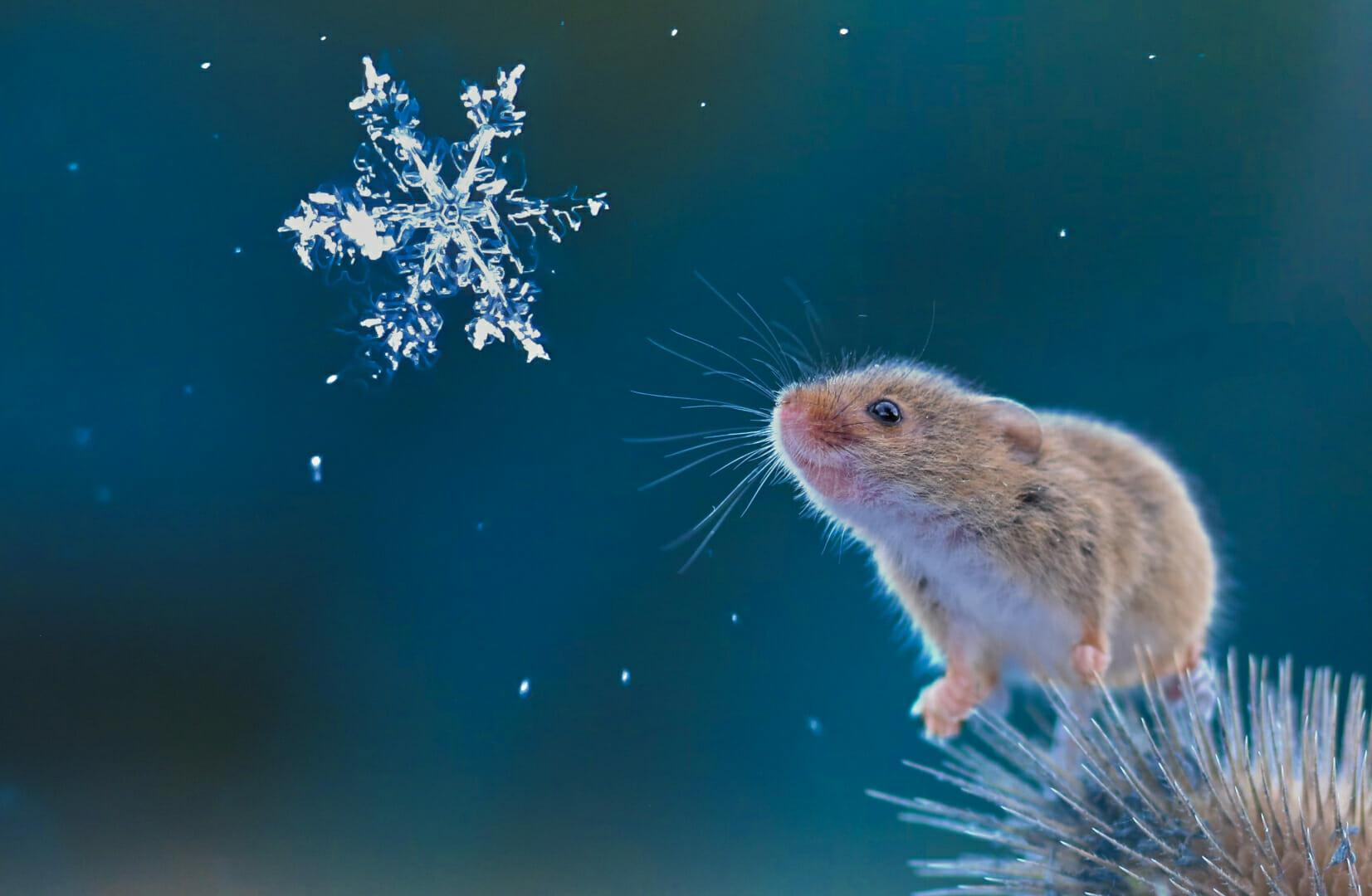 Snowflake Barbara Coulson