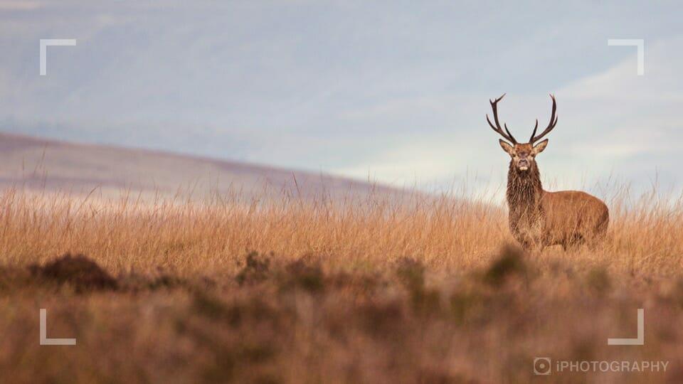 Photographing deer