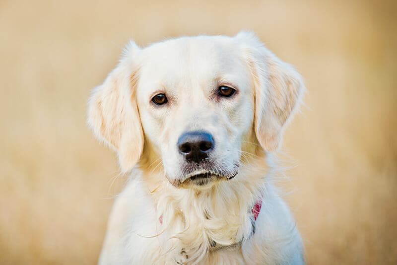 dog photos iPhotography blog Image 3