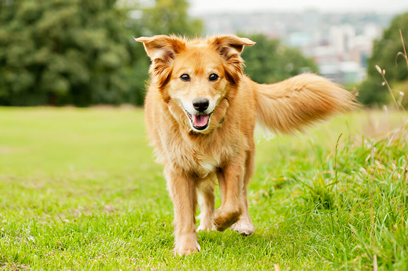 Dog Photography Tips iPhotography Image 4