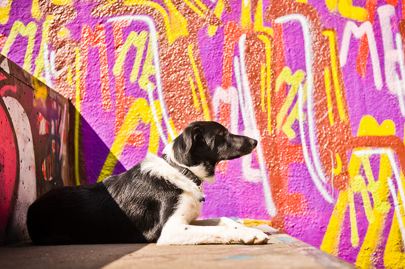 Dog photos street photography pink graffiti