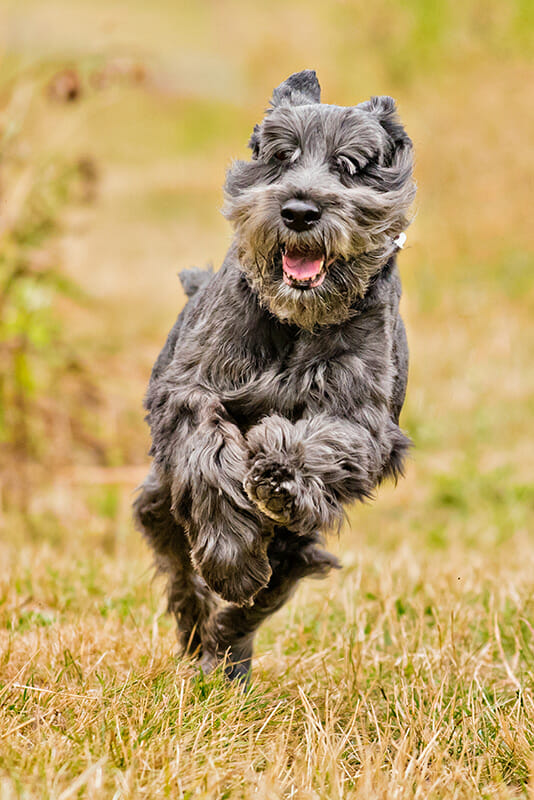 Dog photography tips iPhotography 10