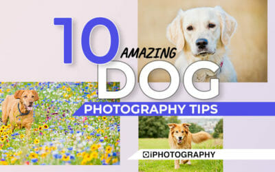 Dog Photos: 10 Top Tips for Photographers
