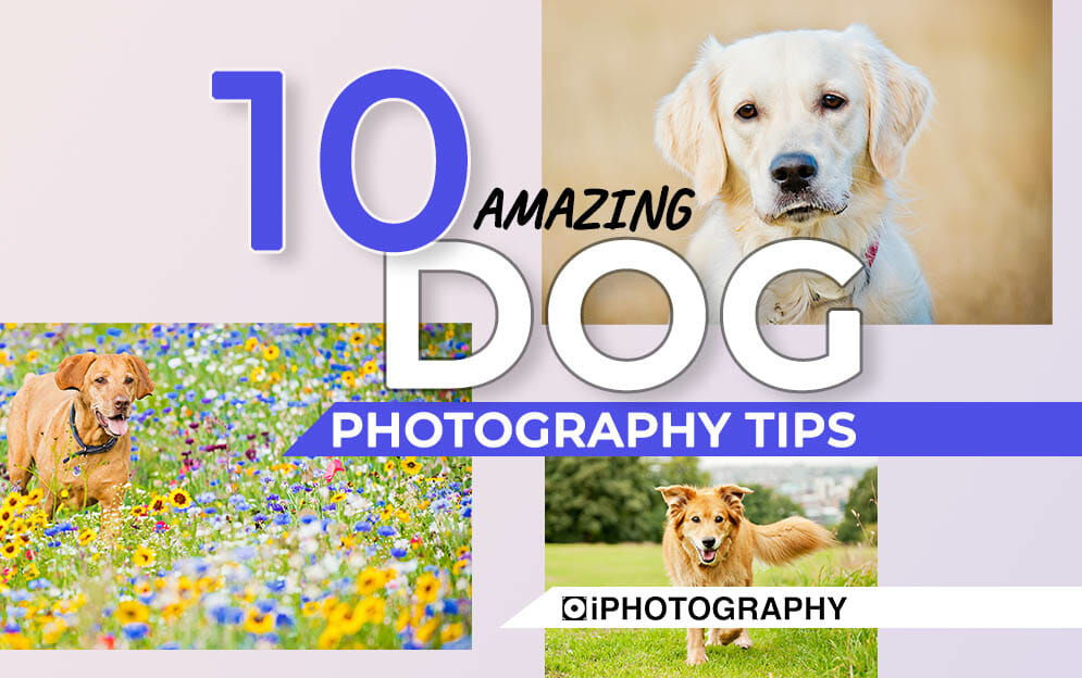 dog photography Blog Feature Image Template 2020 (with text markers)