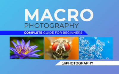 Macro Photography –  The Complete Guide for Beginners