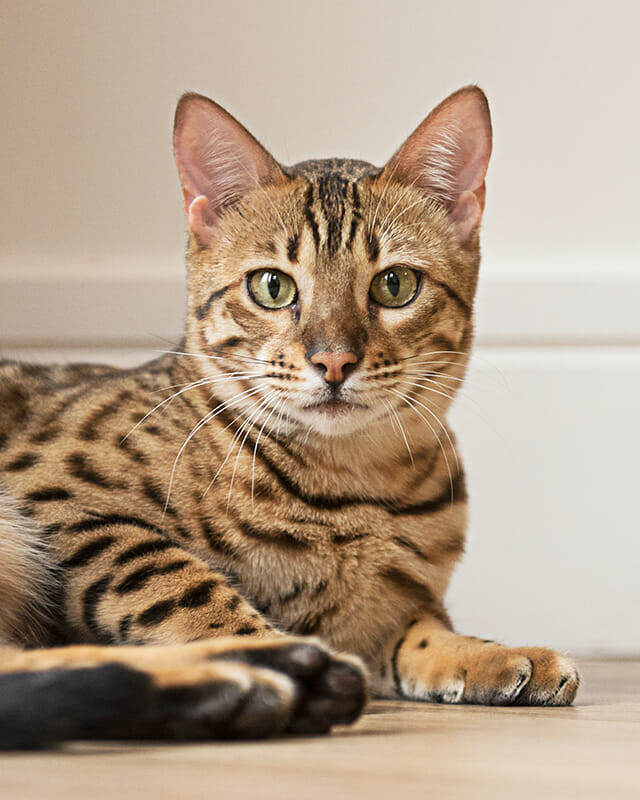 iPhotography Guide to Cat Photography Image 1