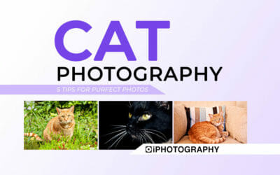Cat Photos: 5 'Purfect' Tips for Photographers