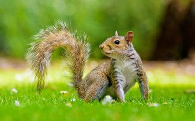 How to Photograph Garden Animals