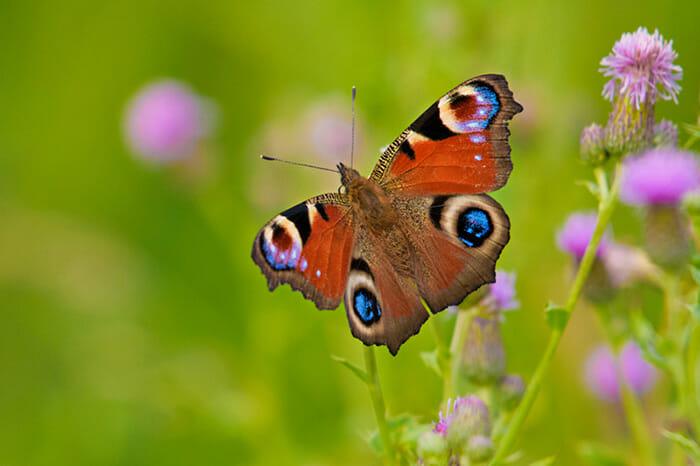 photographing garden animals by Rachel Sinclair Copyright 2021