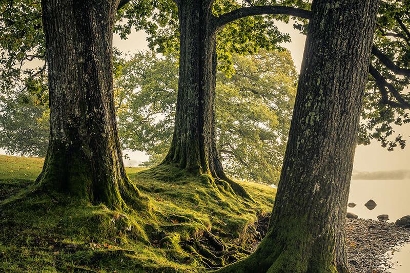 Woodland - Landscape Course
